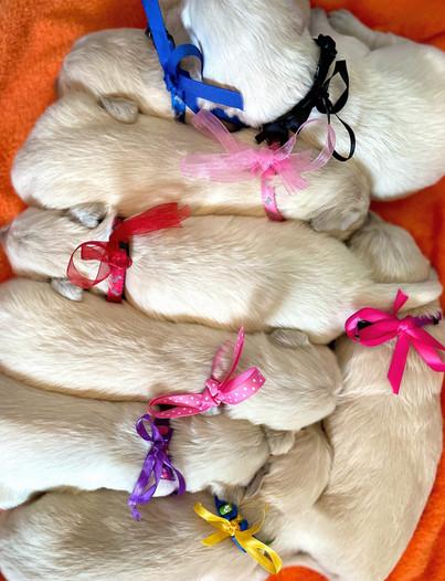 sweet puppy ribbons.jpg