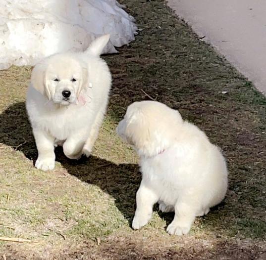 light pups.jpg