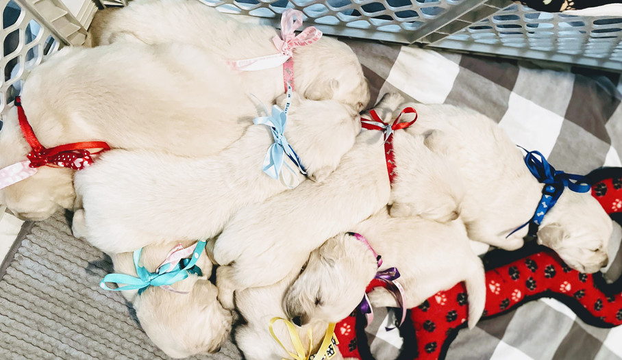 babies pile 0723.jpg
