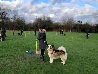Dog Training with Amanda