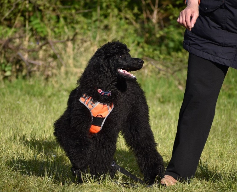 General Obedience Training Course