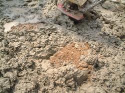 土の色が変わってきた