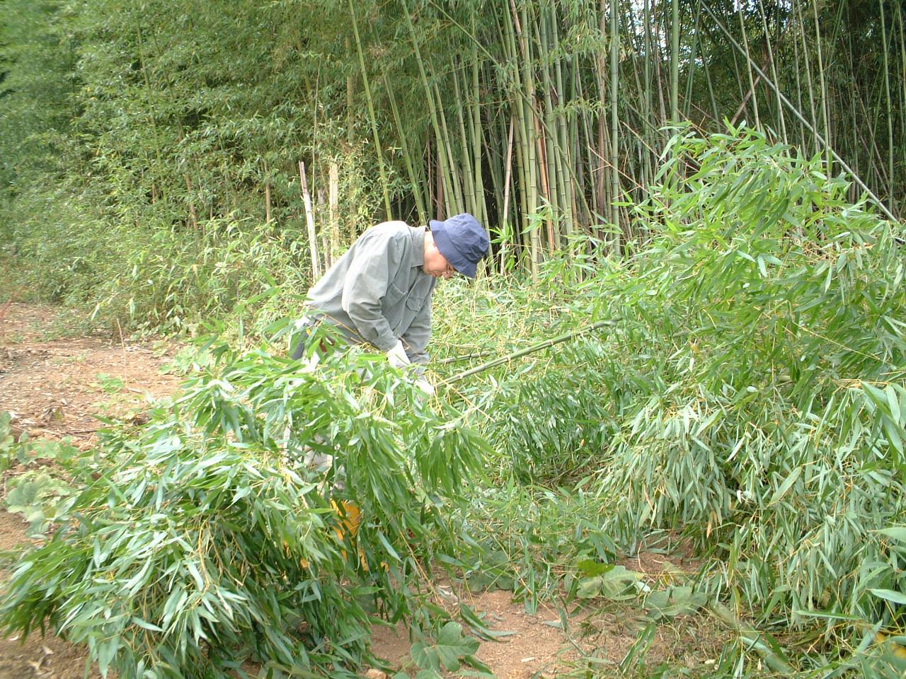自邸 竹伐採