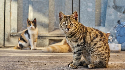 Feral cats outside
