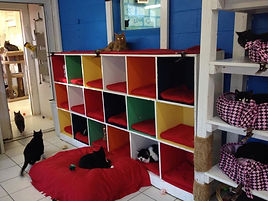 cozy cubbies in the catter