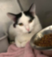 Black & white cat Bethany