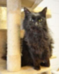 Black cat Dexter