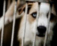 sad dog behind bars