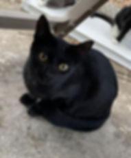 Kaloni-Black cat