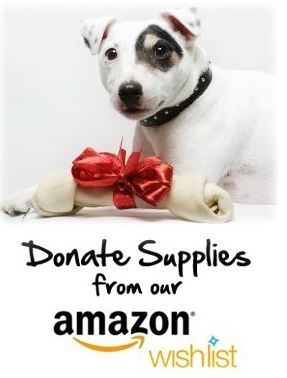 Donate supplies from our Amazon wihlist