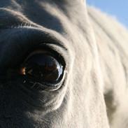 """Facebook - """"Bugs Eye View"""", Photograph,"""