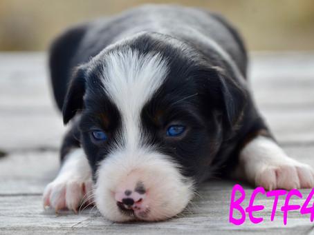 Puppies, puppies, Puppies!!!!
