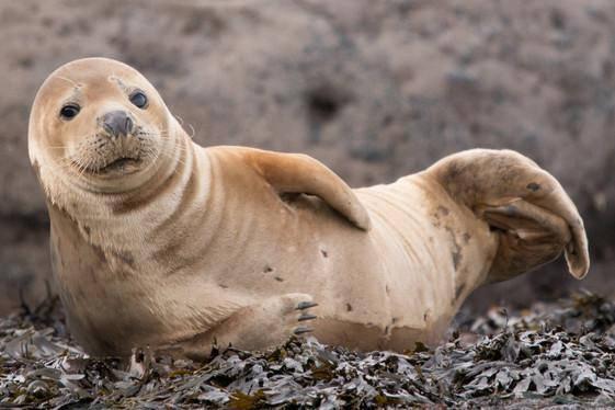 Happy Seal 2