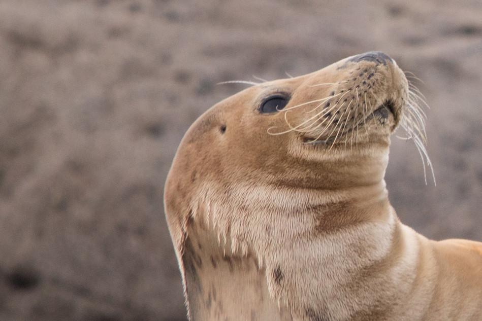 Happy Seal 3