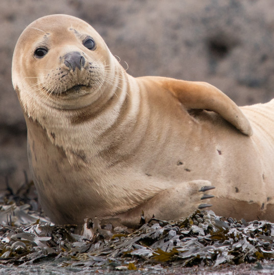 Happy Seal 1