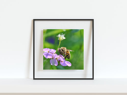 "Busy Honey Bee 5""x5"" mini print"
