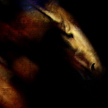 darkhorse.jpg