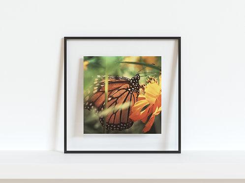 "Mother Monarch 5""x5"" mini print"