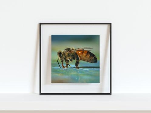"""Thirsty Honey Bee 5""""x5"""" mini print"""