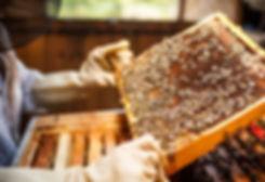 beekeepinglessons.jpg