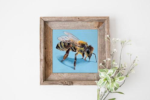 Honey Bee Study
