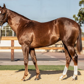 Four Yearlings Purchased at Inglis Classic