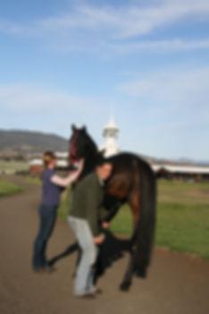 racehorsecareback (1).jpg