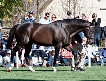 In Foal to Medaglia D'Oro