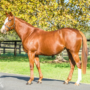 The process of purchasing a broodmare