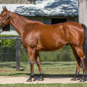 Success at the virtual Inglis Australian Broodmare Sale for Boomer