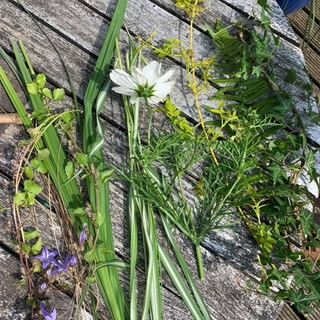 Collect Wild Flowers and Grass