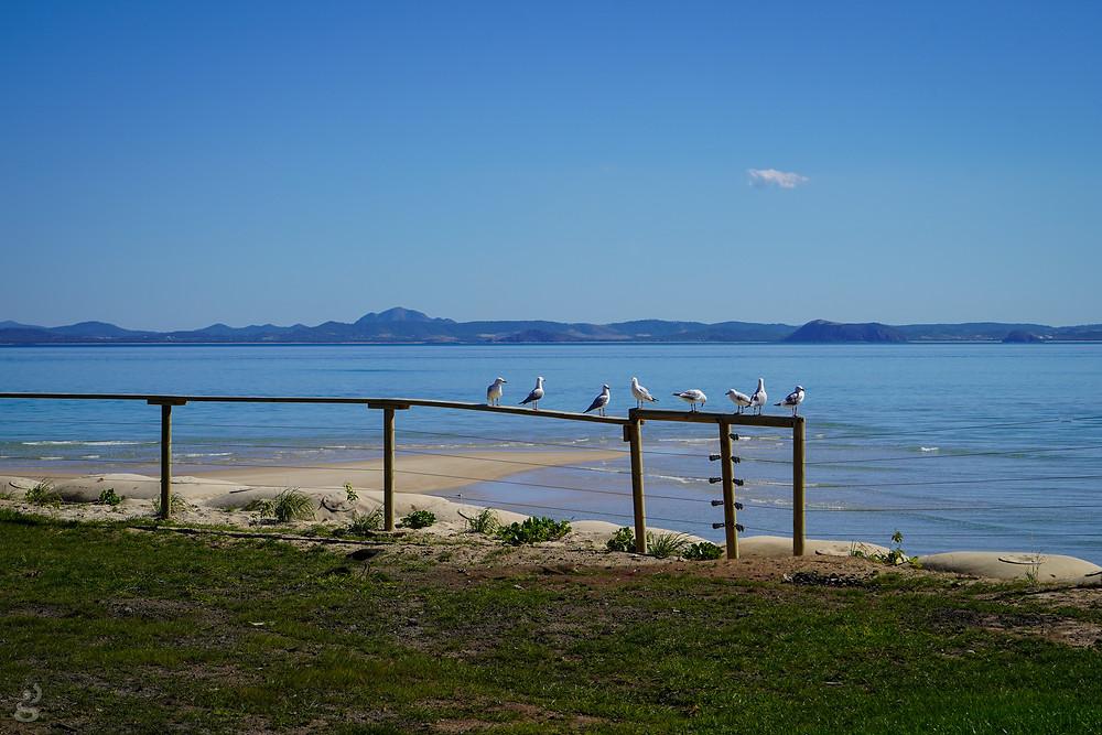 seagulls on Great Keppel Island