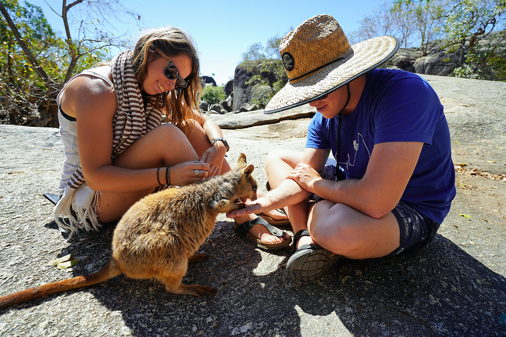 rock wallaby feeding Granite Gorge