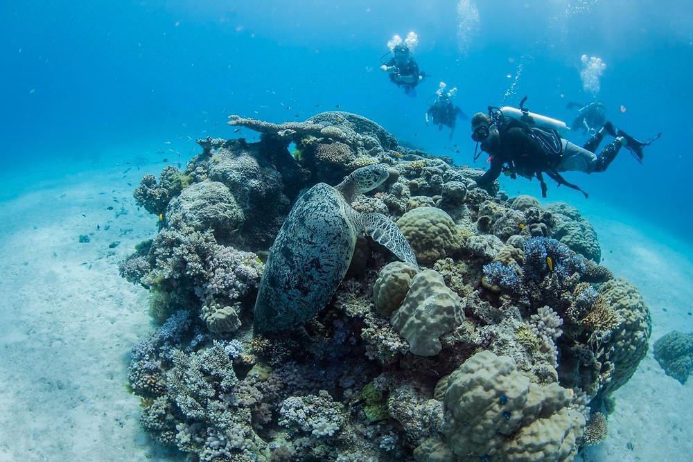 sea turtle Great Barrier Reef