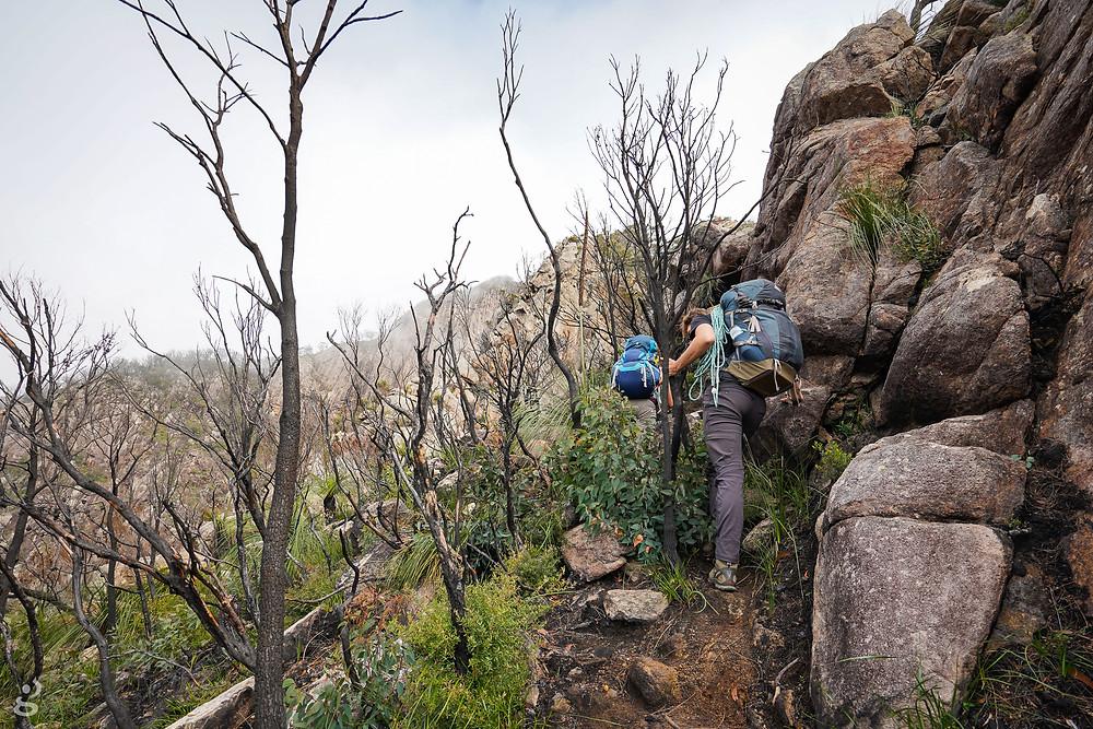 Bushfire damage Mount Barney