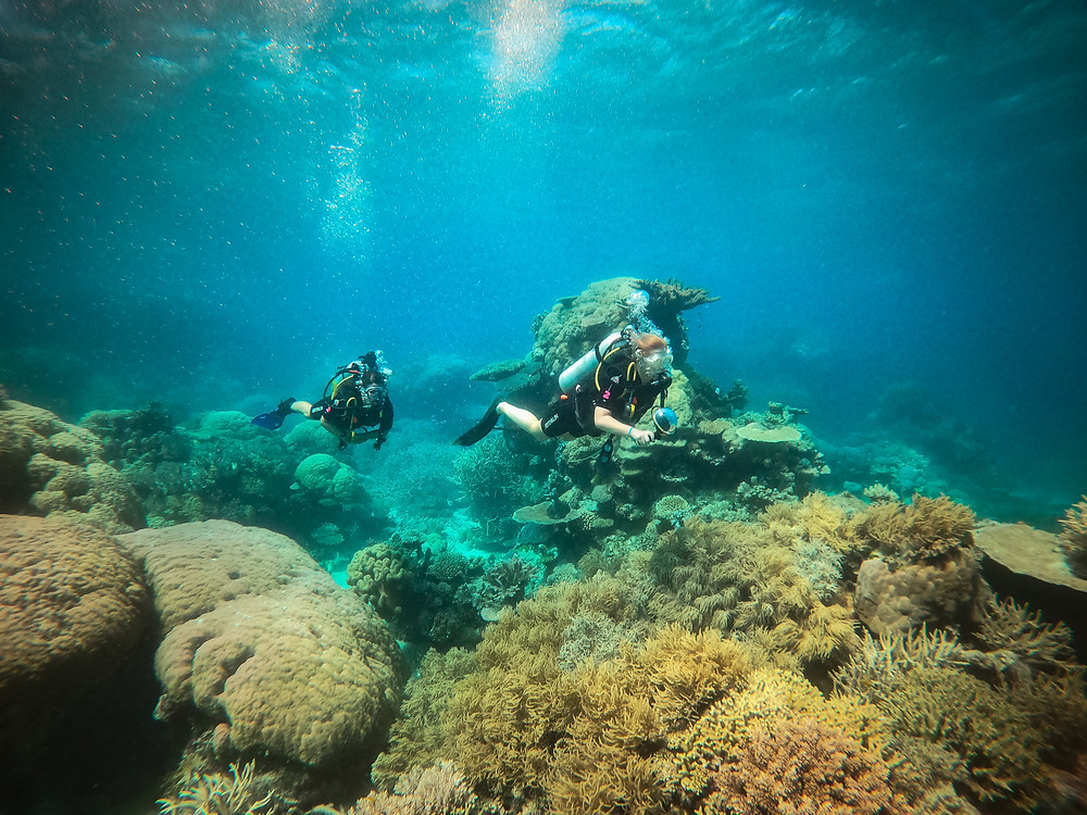 group scuba best diving day tour from Cairns