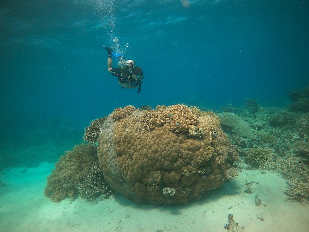 coral reef Great Barrier Reef best diving day tour from Cairns