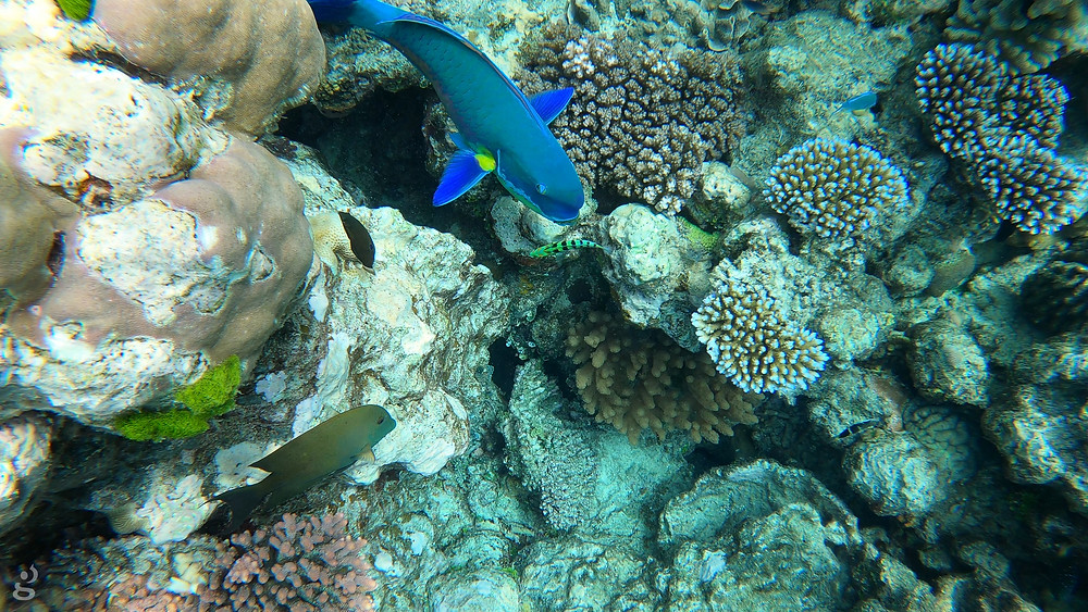 Great Barrier Reef tropical fish