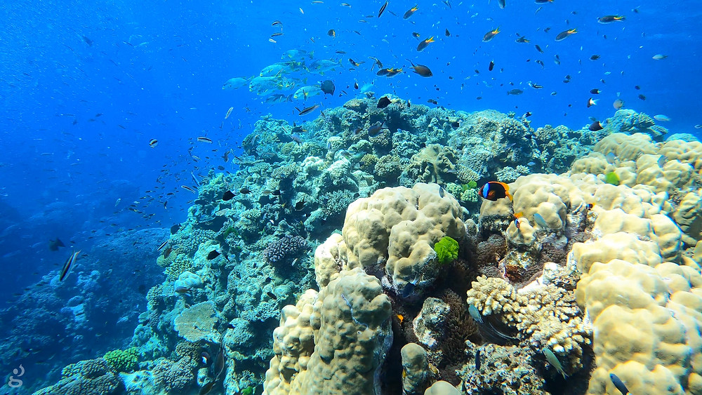 best diving day tour from Cairns Great Barrier Reef