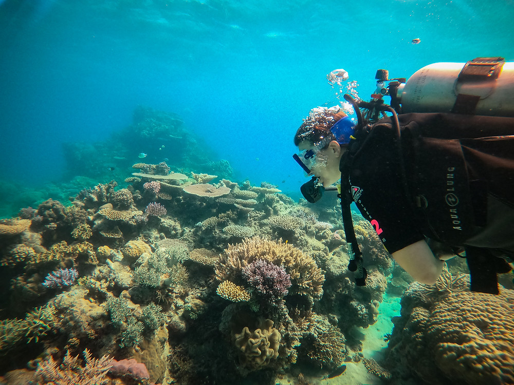 scuba diving best diving day tour from Cairns