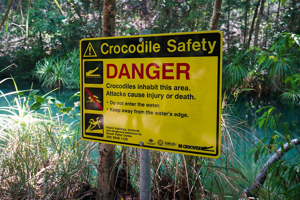 crocodiles Kakadu