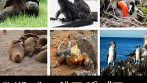 【終了】2018年10月27日『旅トーク at 恋する虜』~ガラパゴス諸島の動物たち~