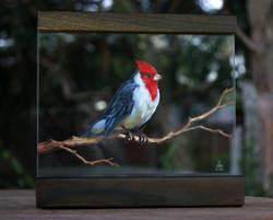 Paraguayan cardinal