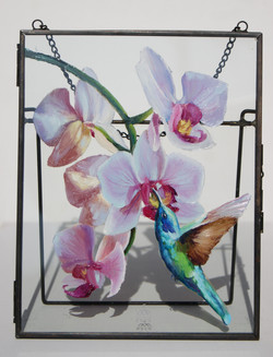 Colibri and orchids. The herald