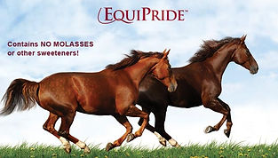 equipride_horses.jpg
