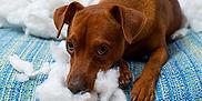 calc_tierhalter-hund.jpg