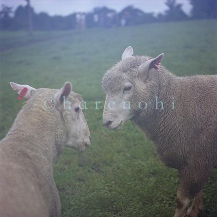 ハレノヒ写真 ムラカミカヨのギャラリー 10