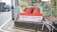東京のいちご