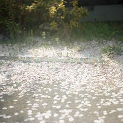 ハレノヒ写真 ムラカミカヨのギャラリー 9