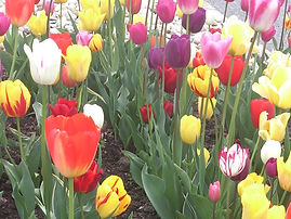 Welche Bachblüten helfen